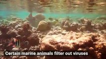 These Animals Clean Viruses From the Ocean