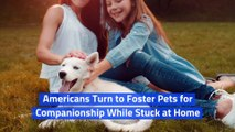 Americans Turn to Foster Pets for Companionship While Stuck at Home