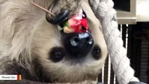 Watch When Happens When Sloth Is Offered A Rose