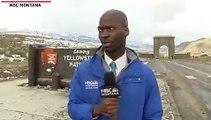 La réaction hilarante d'un journaliste devant un troupeau de bisons s'approchant de lui