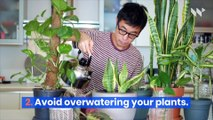 8 Tips for Taking Care of House Plants