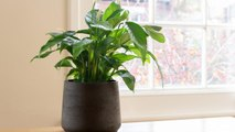 Indoor Plants That Can Help Cure Your Dry Skin
