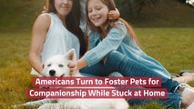 Now Is A Good Time For A Foster Pet