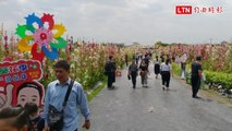 超夢幻!員林南區公園蜀葵花盛開 吸近千民眾賞花拍照