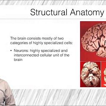 Fundamentos de Neurociencia para la Neuroimagen. Estructura y anatomía del SNC Parte 1