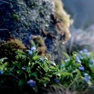 Outlander S01E01 Sassenach