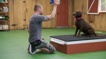 Lucky Dog - Rocky