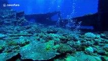 Scuba divers in Egypt swim through eerie shipwreck in Red Sea