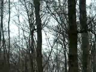 ein rabe fliegt auf einen baum