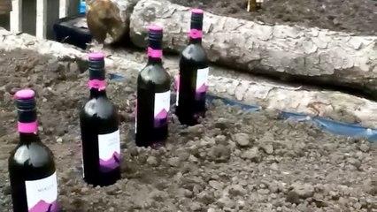 Un hombre planta cerveza en su jardín y el vídeo se hace viral