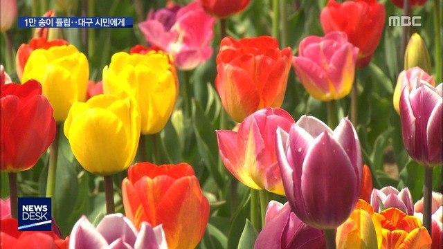 """취소된 '축제' 꽃들은 어디로…""""대구 시민에 선물"""""""