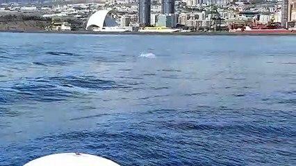 Delfines en la costa de Santa Cruz durante el estado de alarma