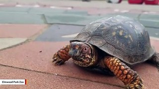 Need March Madness Excitement? These Turtles Got You Covered