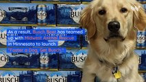 Get 3 Months of Free Busch Beer for Adopting or Fostering a Dog