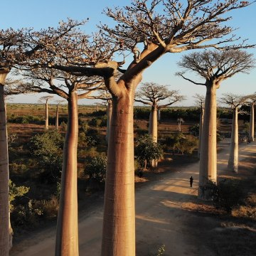 Madagascar Celebrates Birthday With Massive Tree-Planting