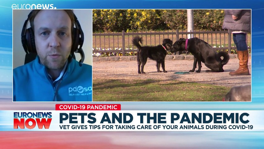 'Can they get COVID-19?' and other questions about pets during a pandemic