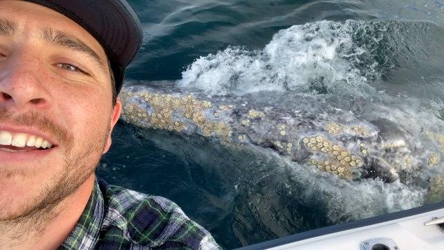 Speelse walvissen omringen schepen in Californië