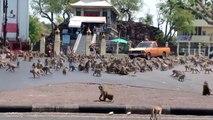 Confinement : des animaux en profitent, d'autres en difficulté