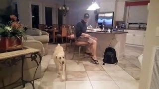 Votre chien reste votre meilleur ami, même en plein confinement