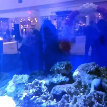 Stingrays and sharks at Eastwood mall in PA