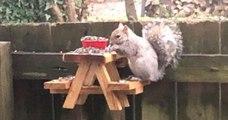 Un homme a construit une mini table de pique-nique en bois pour nourrir les écureuils de sa cour