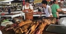 Chine : la ville de Shenzhen interdit à ses habitants de consommer de la viande de chat et de chien