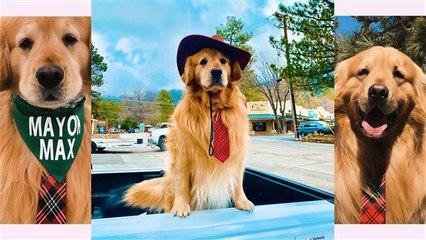 Bürgermeister Max in Kalifornien ist ein... Hund?!
