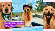 Pets with Professions: Max was elected Mayor of a city... and he's a dog