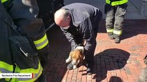 Dog Rescued After Being Trapped Under Owner's Vehicle For 40 Miles