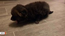 Construction Worker Brings Home A 'Stray Puppy.' It Turns Out To Be Fox Cub