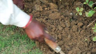 Here's How Soil Gets Its Peculiar Smell