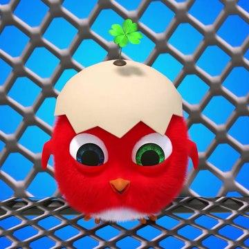 Cuckoo 2020 - Compilation Crazy CucKoo # 35 - New Cartoons for kids