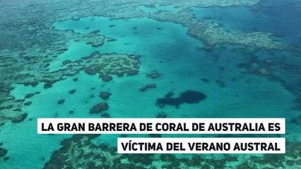 La Gran Barrera de Coral de Australia es víctima del verano austral