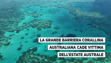 La Grande Barriera Corallina Australiana cade vittima dell'estate australe