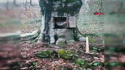 Koronavirüsten korunmak için oyduğu ağaç kovuğuna girdi