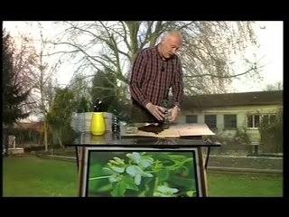 Plantes Grimpantes - Conseils de Jardinage