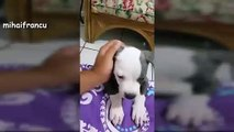 Puppies Barking - A Cute Dogs Barking Videos Compilation