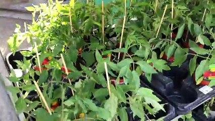Mit Vertrauenskasse gegen Coronakrise: Pflanzen- und Blumenhandel wird erfinderisch