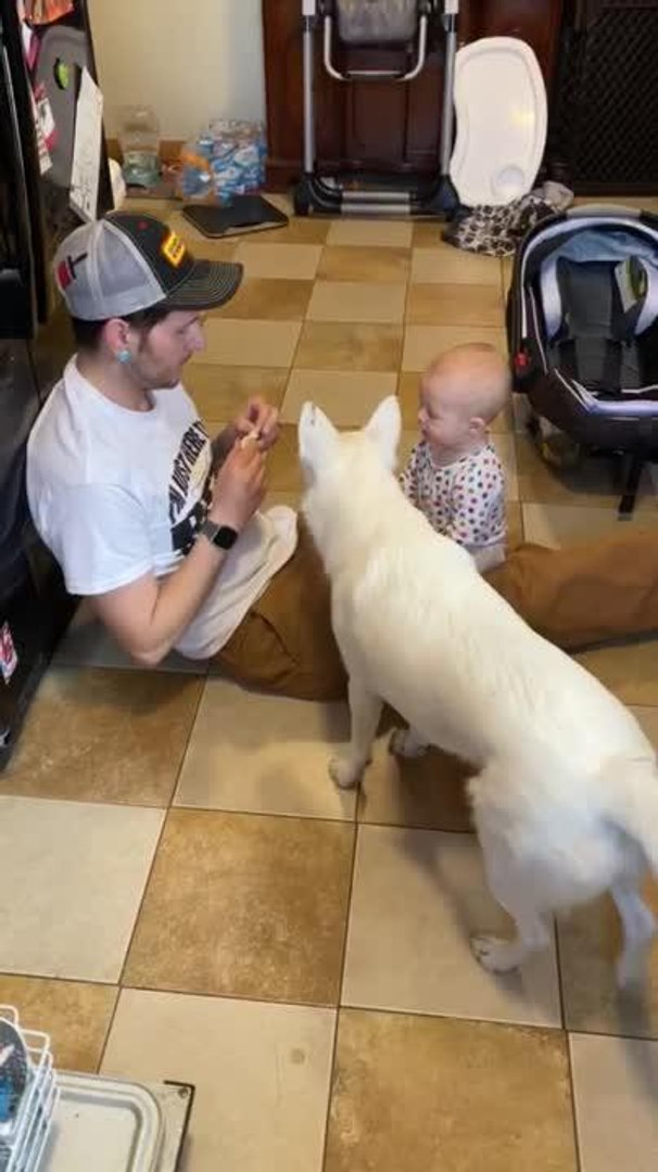 Man Takes Turns Feeding his Baby and Pet Dog