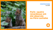 Paris : quatre renardeaux ont été observés au Père-Lachaise