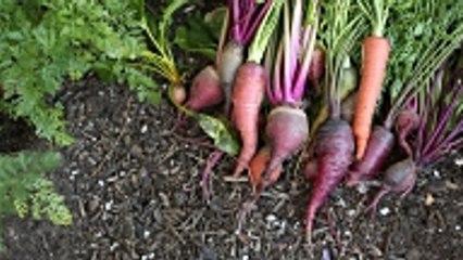 Les 5 légumes les plus faciles à cultiver chez soi