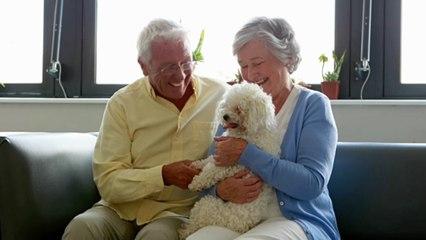 Diese 5 Hunderassen sind besonders gut für Senioren geeignet