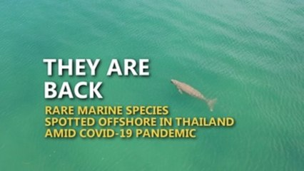 Rare marine species return to Thailand's shores in absence of tourists