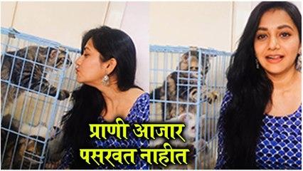 Jui Gadkari ENJOYS Her QUARANTINE With Her CATS प्राणी आजार पसरवत नाह