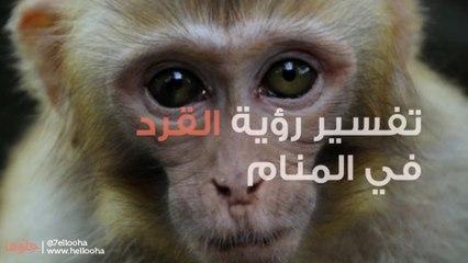 رؤية القرد في المنام وتفسير حلم القرود بالتفصيل