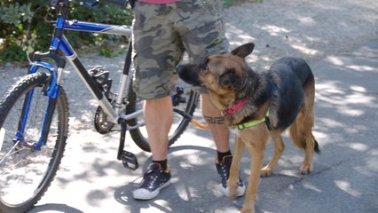 Lucky Dog - Bike Run