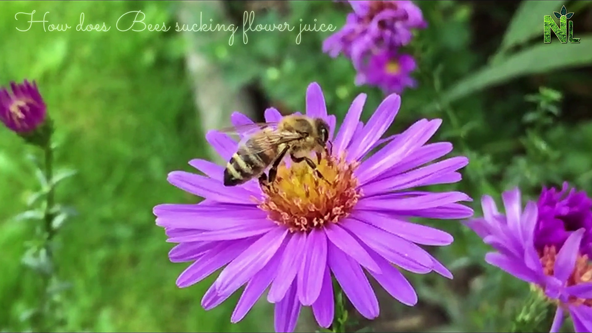 Honey Bees Make Honey … and Bread? | Naturelife Relaxation and How bees turn nectar into honey?Bee