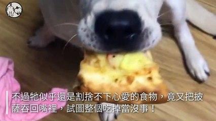 petmao_nownews-copy4-20200502-17:22