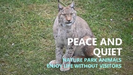 Nature park animals enjoy peace and quiet without human visitors