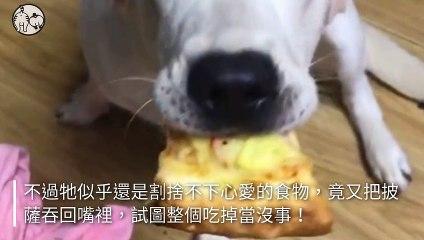 petmao_nownews-copy1-20200504-20:00